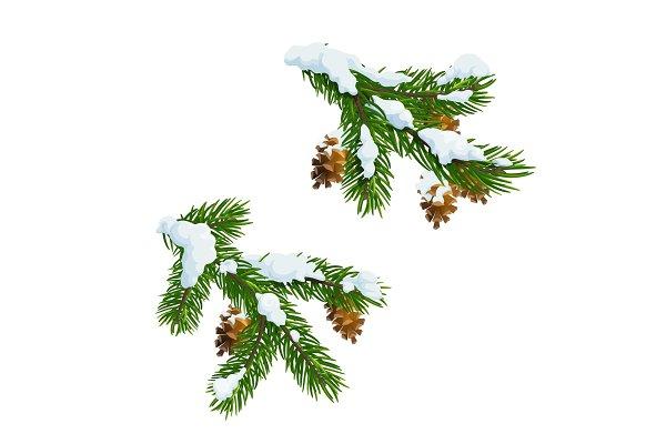 Christmas pine, fir branch in snow