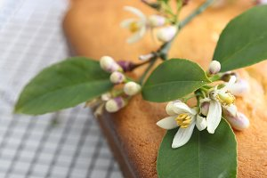 Orange loaf cake and citrus blossoms