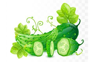 Cucumbers vector illustration