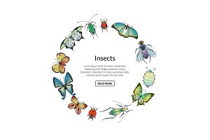 Vector hand drawn insects in circle