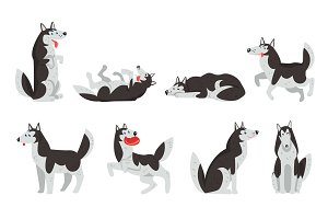 Siberian husky character sett, dog