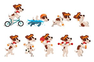Cute sportive jack russell terrier