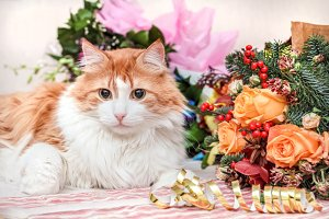 Luxurious red cat and bouquet