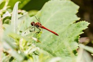 Pretty dragonfly on sunny leaf
