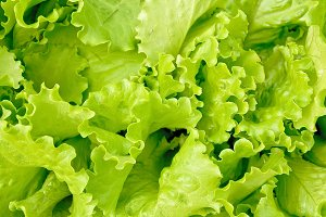 Texture of green lettuce