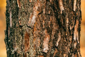 close up view of cracked brown tree
