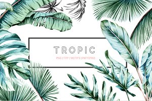Tropic, Luxurious & Lush!