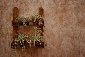 Decorative plants on the wall