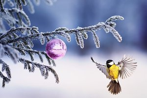 bird on christmas fir in winter