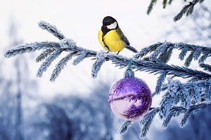 bird tit on christmas tree