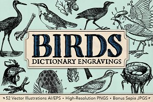 Dictionary Engravings Birds Vintage