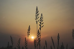 Sunset tall grass