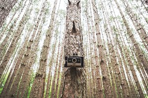 Polaroid hanging from a tree