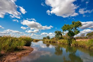 Kruger Park Scenery