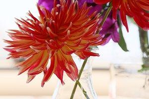 Bright dahlias in a glass jar