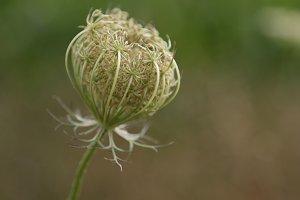 A seed head in a field