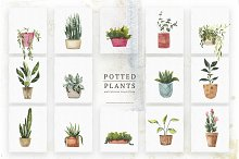 Watercolor Potted Plants