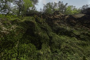 Rock face covered with moss