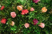 Green plants and rose flowers  by  in Abstract