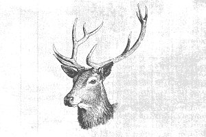 Textured Vintage Deer Vector