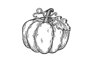 Pumpkin engraving vector