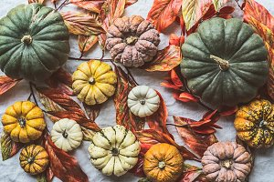 Autumn with farm colorful pumpkins