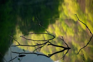Branches in the water
