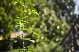 The twig in front of the Bokeh