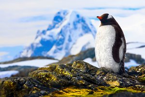 penguin is standing on the rocks in