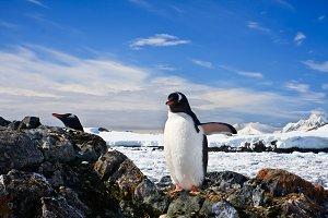 penguins nest