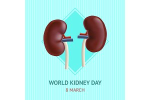 Kidney Human Internal Organs Card
