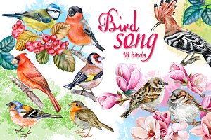 Songbird collection