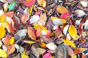 Feet in Fall