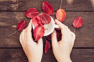 Red leaves, women's hands, cup of co