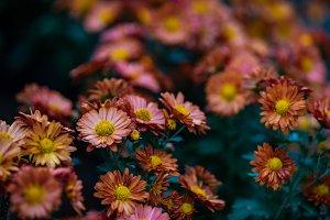 Autumnal floral background