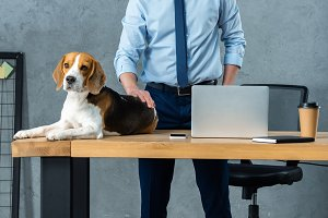 cute beagle sitting on table with la