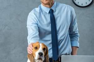handsome businessman touching beagle