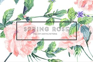 Spring Rose, Fresh watercolors!