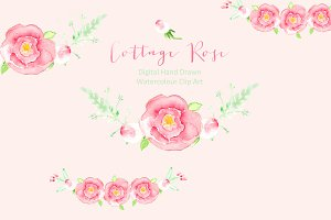Cottage Rose Watercolor clip art