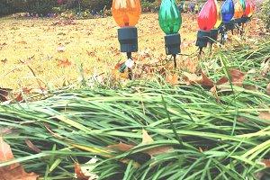 Xmas lights in the Yard