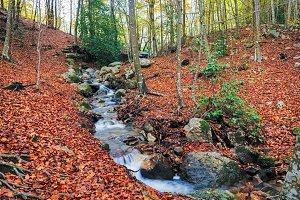 Autumn Beech Forest wirh Creek