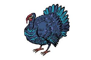 turkey bird, thanksgiving day