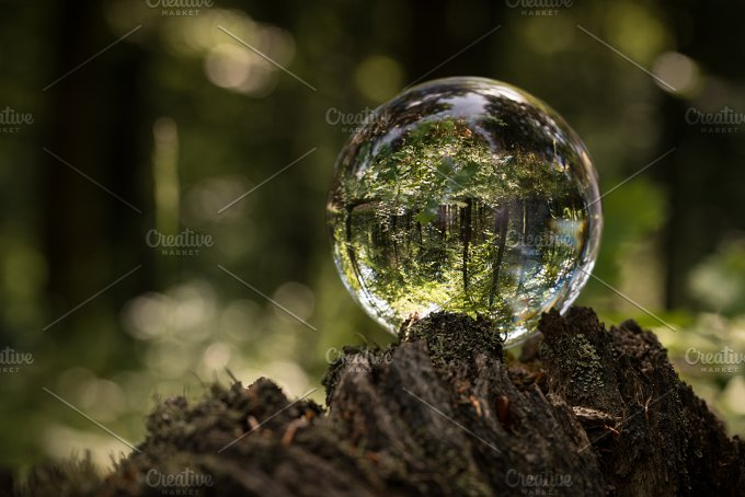 Forest world... - Nature