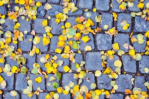 Yellow autumn leaves on a square til