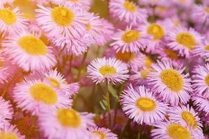 Beautiful blooming flowers in garden
