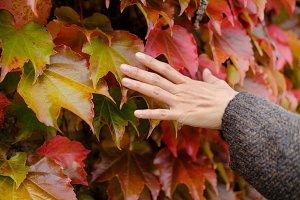 Fall and Autumn Season Concept
