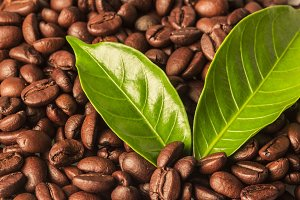 Coffee beans on a leaf