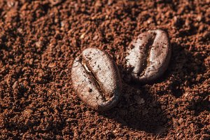 coffee beans isolated on powder