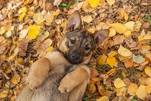 cute puppies in yellow leaves