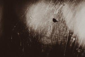 Black white photo spider is sitting